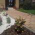 Remek dísznövények lephetik el a kertjét, ha Ön is úgy akarja!